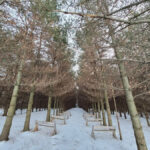 maidenwood-weddings-and-events-in-the-woods