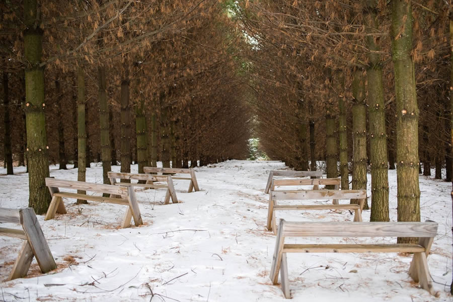 maidenwood-weddings-and-events-in-the-woods-2